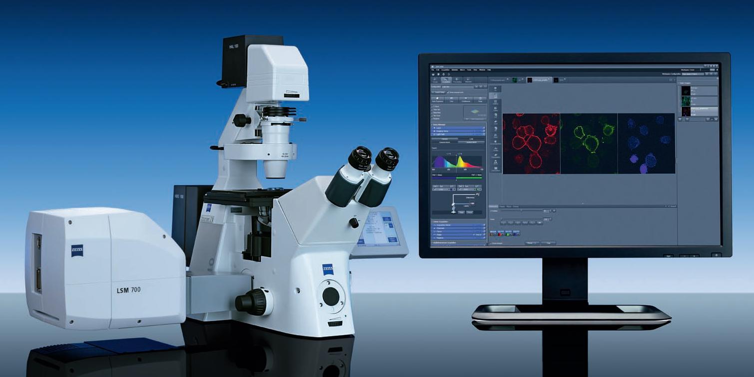 Rcf Lsm 700 Confocal Microscopy